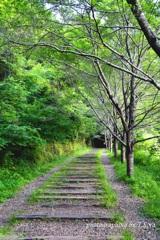 武庫川渓谷の新緑
