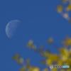 秋景 有明の月