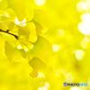 黄檗色に染まる