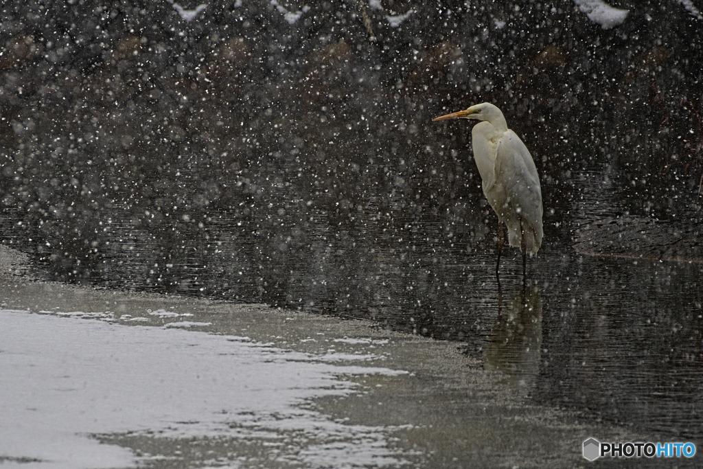 小雪舞う中