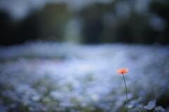 孤独とオリジナリティ