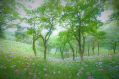 木立を吹き抜ける6月の風
