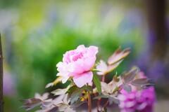 春のドヤ顔