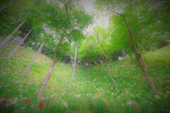 木立を吹き抜ける6月の風2