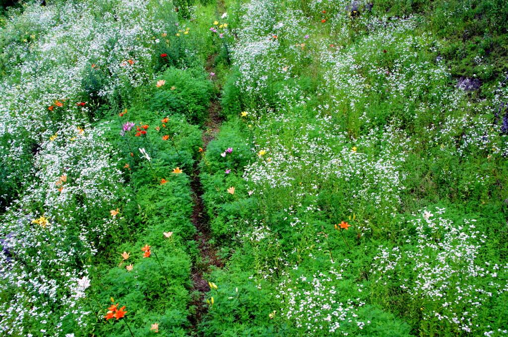 花園への痕跡(2)