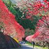 花桃の里   日本の風景