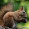 胡桃を食べるときの正しい姿勢
