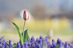 春の陽の下に立つ