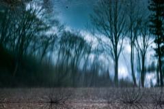 水に棲む森