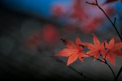 秋が残してくれたもの