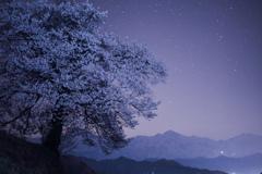 星と桜と北アルプス
