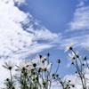 純白雲に同化する