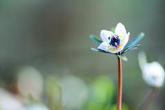 希望の花開く