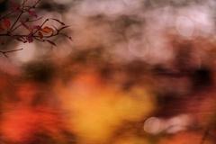 水面に揺れた秋