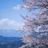 桜は そよ風のように