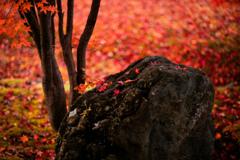 石の上に降った秋