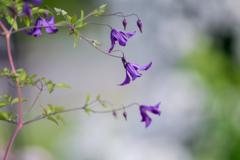 紫色の横顔