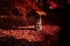 黒赤の秋庭
