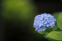 影に佇む花