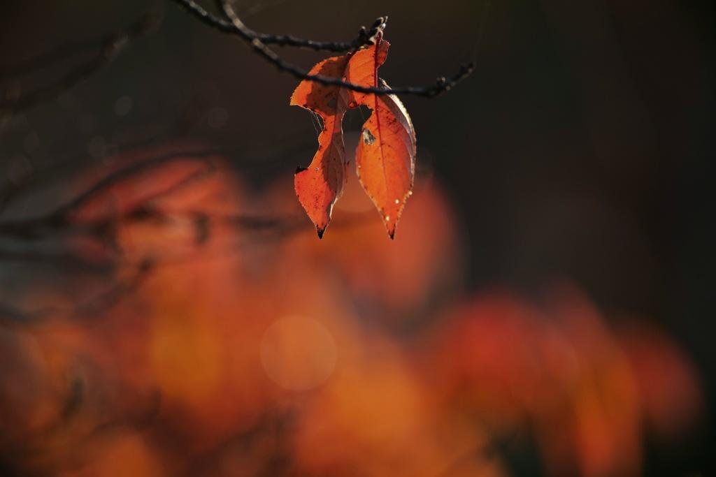 何気ない秋の色