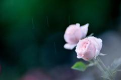 ひとすじの雨