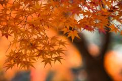 禅那の秋葉