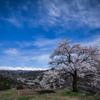 春満天の山桜