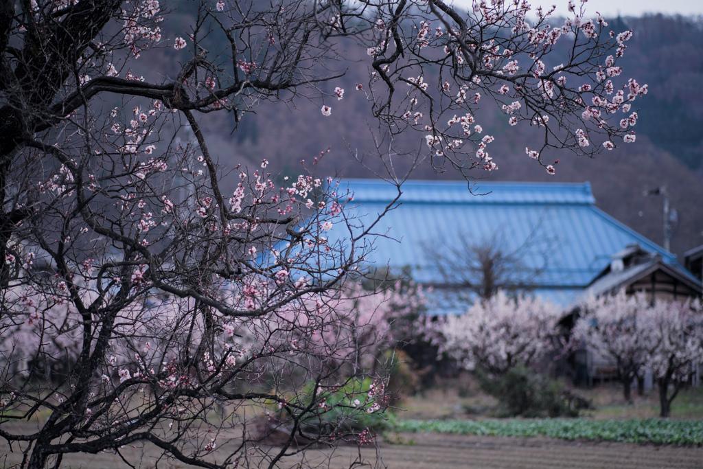 花咲く里の春