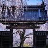 開かれた桜門