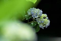姿を見せた初夏の花
