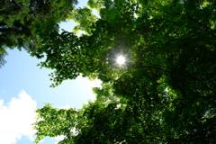 葉の隙間からの光芒