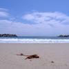 海藻と海と空