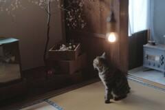 光と影のまにまに