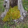 ジオラマ向けの木
