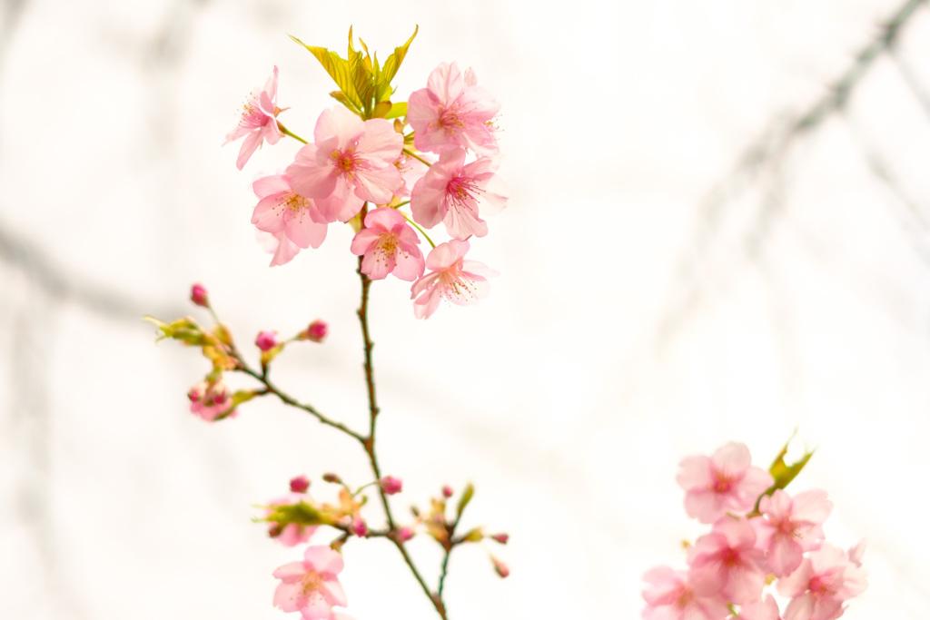 春色の微笑み