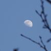 夕方に見た月
