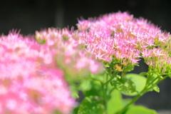 小さな花が集まって