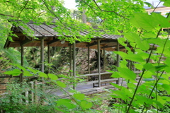 青葉と屋根のある木橋