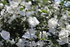 白、白、白