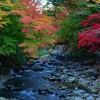 修善寺の秋