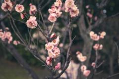 春寒の夕暮
