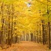秋の中へと続く道