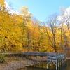 秋色の美しさと寂しさ
