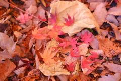 紅葉の集合
