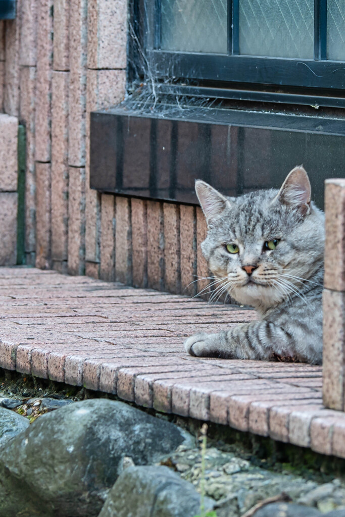 ノラ猫のはなし2