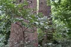 夏を待つ緑葉