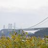 季節遅れの向日葵と関門橋