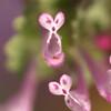 ♡ハートのお花♪