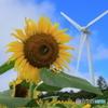 ひまわりと風車