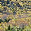 奥志賀高原の紅葉